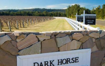 Dark Horse – Sound wines at Affordable Prices